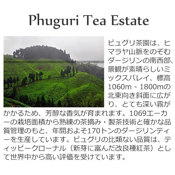 2020年ダージリンファーストフラッシュFTGFOP1_DJ-13ピュグリ茶園50g / 紅茶 ブラックティー クオリティーシーズン 茶葉 クオリティーシーズンティー シーズナルティー 数量限定