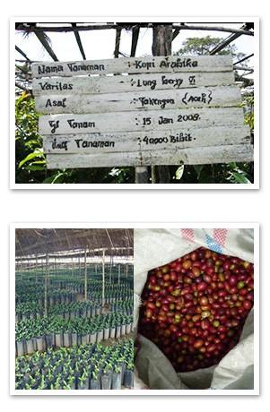 インドネシア ワハナ農園 ロングベリーについて