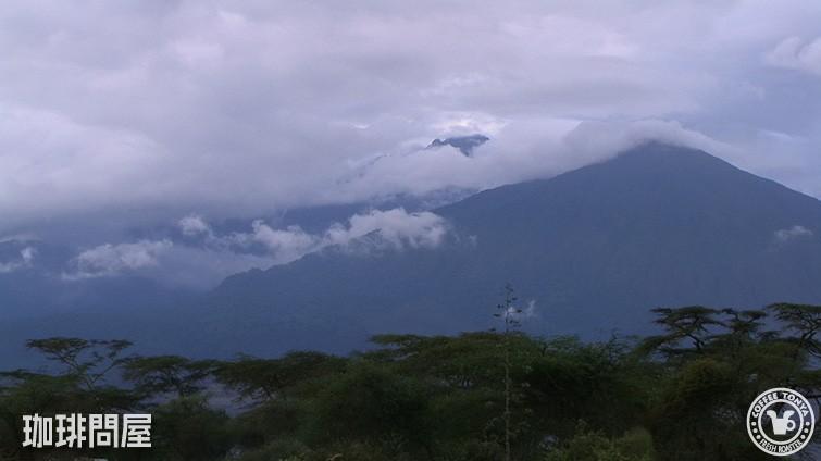 タンザニア リマ AA キボー
