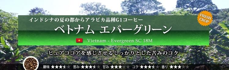 ベトナム エバーグリーン - Vietnam Evergreen SC 18M