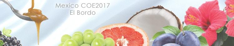 メキシコ COE2017 #15 エル ボルドのカッピングイメージ