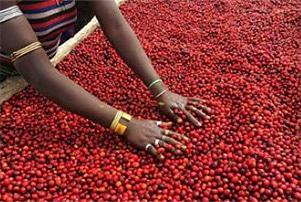 エチオピア ゲシャ ビレッジ農園 ゲイシャ ナチュラルの香味
