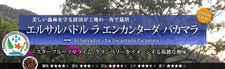 エルサルバドル ラ エンカンターダ パカマラ - El Salvador La Encantada Pacamara