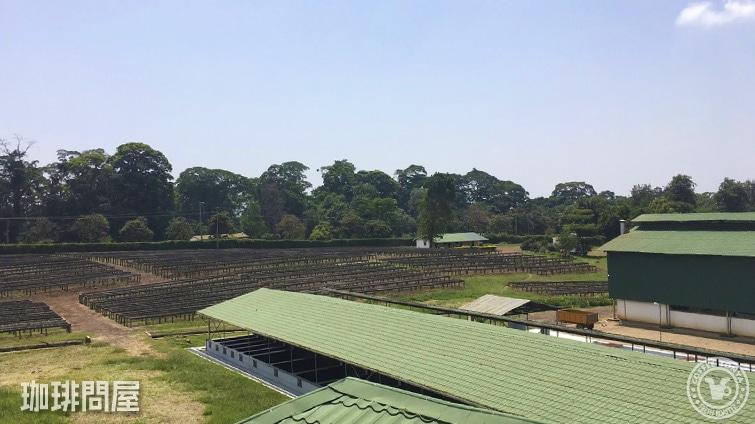 タンザニア キリマンジャロAA TOP キチョニ農園