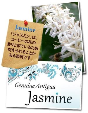 グアテマラ ジェニュイン アンティグア ジャスミンについて