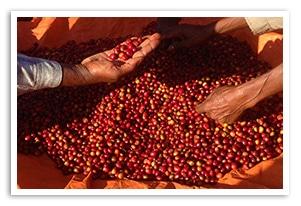 エチオピア ブネエ ダネ シャオの香味