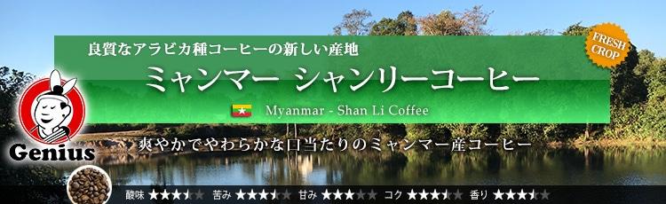 ミャンマー シャンリーコーヒー - Myanmar Ywangan Shan Li Coffee G1 Washed