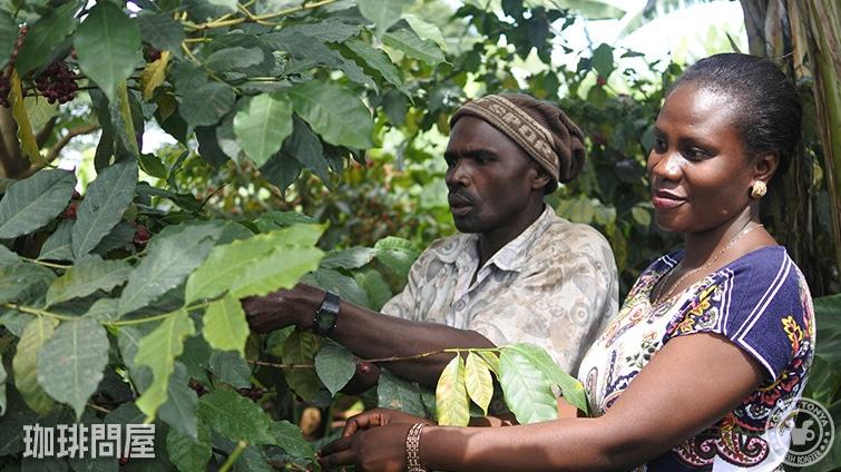 タンザニア キゴマ キボー AA