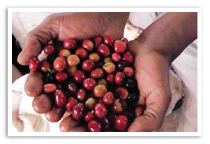 エチオピア グジ ウォッシュド G-1の香味