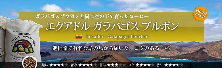 エクアドル ガラパゴス ブルボン - Ecuador Galpagos Bourbon