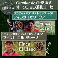 『アンティオキア・ベストカップ』入賞ロット
