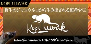 送料無料 コピルアックキャニスター付き スマトラアチェ コピ ルアック Tonya Selection(生豆時100g) セット