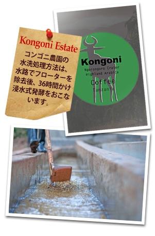 タンザニア ンゴロンゴロAA コンゴニ農園について