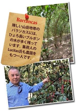 グァテマラ バランカス SHBについて