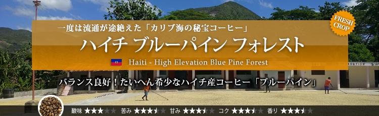 ハイチ ブルーパイン フォレスト - Haiti High Elevation Blue Pine Forest