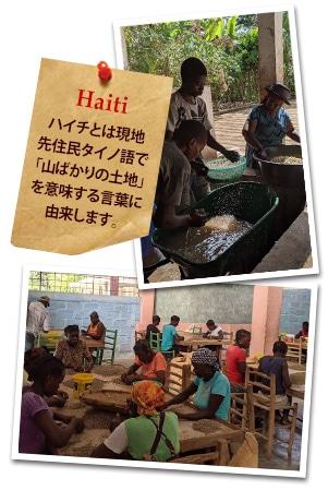 ハイチ ブルーパイン フォレストについて