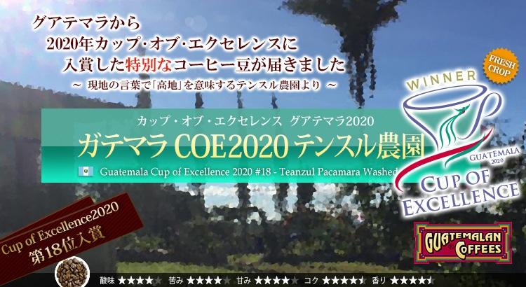 ガテマラ COE2020 テンスル農園 - Guatemala Cup of Excellence 2020 #18 Teanzul Pacamara Washed