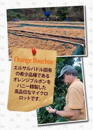 エルサルバドル ディビナ プロビデンシア農園 オレンジブルボンについて