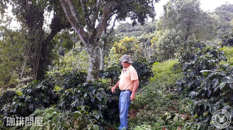 エルサルバドル ディビナ プロビデンシア農園 オレンジブルボン
