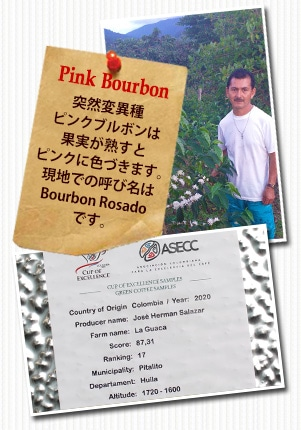 コロンビア COE2020 ラ グアカ ピンクブルボンについて