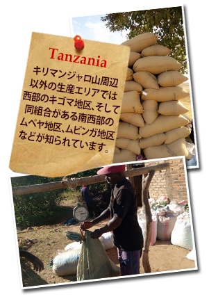 タンザニア AA TOP イエンガについて