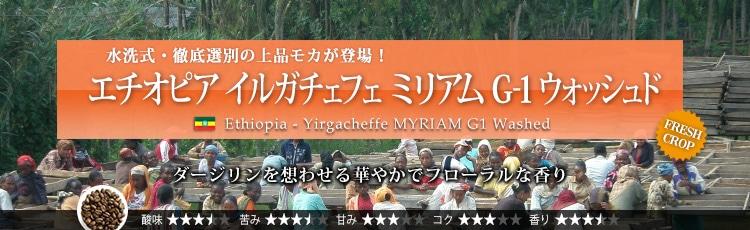 エチオピア イルガチェフェ ミリアム G1 ウォッシュド - Ethiopia Yirgacheffe MYRIAM G1 Washed