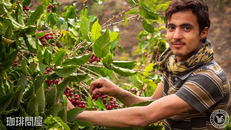 イエメン バニーナヒミ イエメニア ナチュラル1