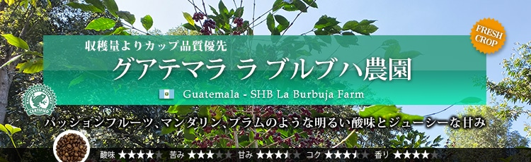 グアテマラ ラ ブルブハ農園 - Guatemala SHB La Burbuja Farm