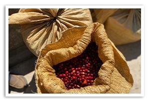 グアテマラ ラ ブルブハ農園の香味